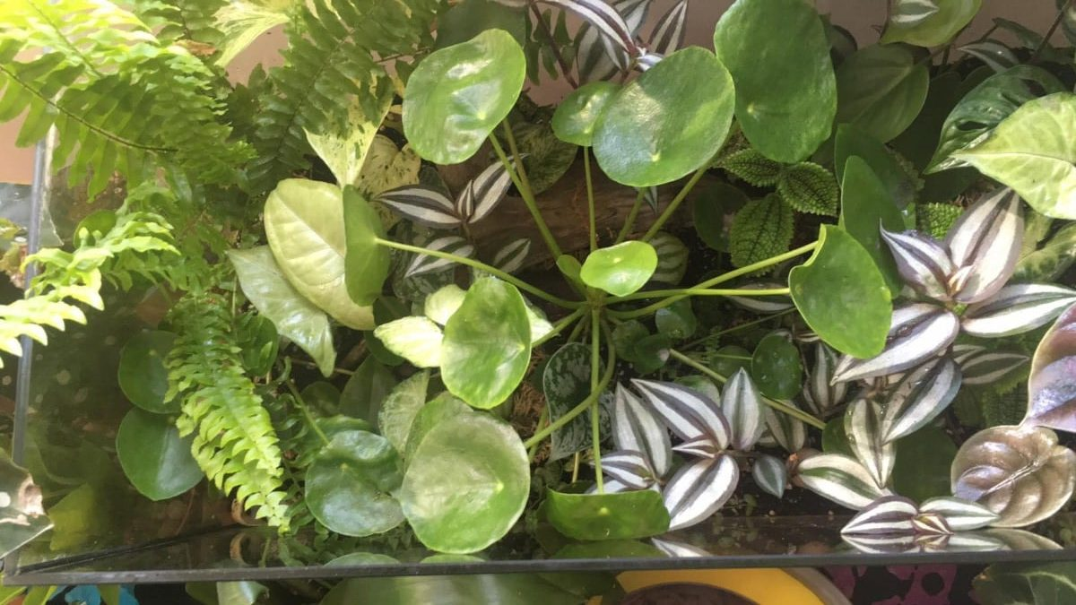 5 Easy Steps To Turn Your Old Fish Tank In A Stunning Garden Your Indoor Herbs
